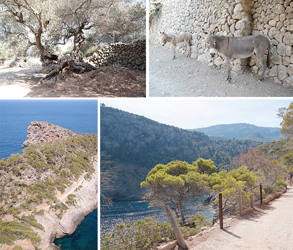 Reiseführer Mallorca - Wanderung Sa Foradada Lochfelsen Paella essen